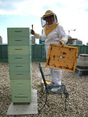 COURSE - Introduction to Beekeeping - Sun. Jan. 28th  1 - 4:30 pm