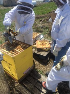 COURSE - Introduction to Beekeeping, Wed. April 25/18, 6-9:30 pm